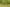 Madárpuszi