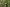 A Kis-Sárrét mocsarainak ritka növénye – a kolokán