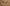 Felbukkantak az első fakó rétihéják a Csanádi pusztákon