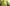 Számomra a jó természetfotó… – Máté Bence természetfotós