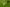 A vérfű-hangyaboglárka (Maculinea teleius) védelme a Mátrai Tájegységben